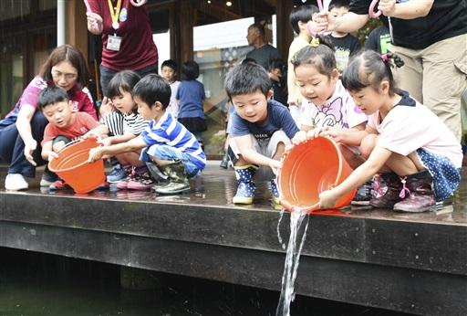 イトヨの稚魚を放流する園児たち=7月6日、福井県大野市糸魚町の本願清水イトヨの里