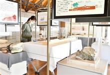 しま模様に地球みる 福井県年縞博物館 特別展始まる