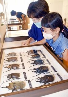世界一のカブトムシとクワガタ展示 「ヘラクレスオオカブト」など、美浜町