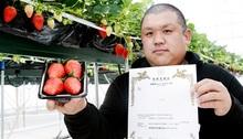 内浦産大粒イチゴ「リッチゴ」 高浜・馬場さん商標登録 高価格帯で出荷目指す